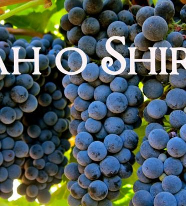 What are Syrah and Shiraz?