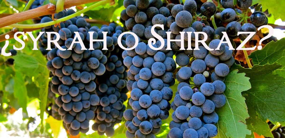 ¿Qué son Syrah y Shiraz?