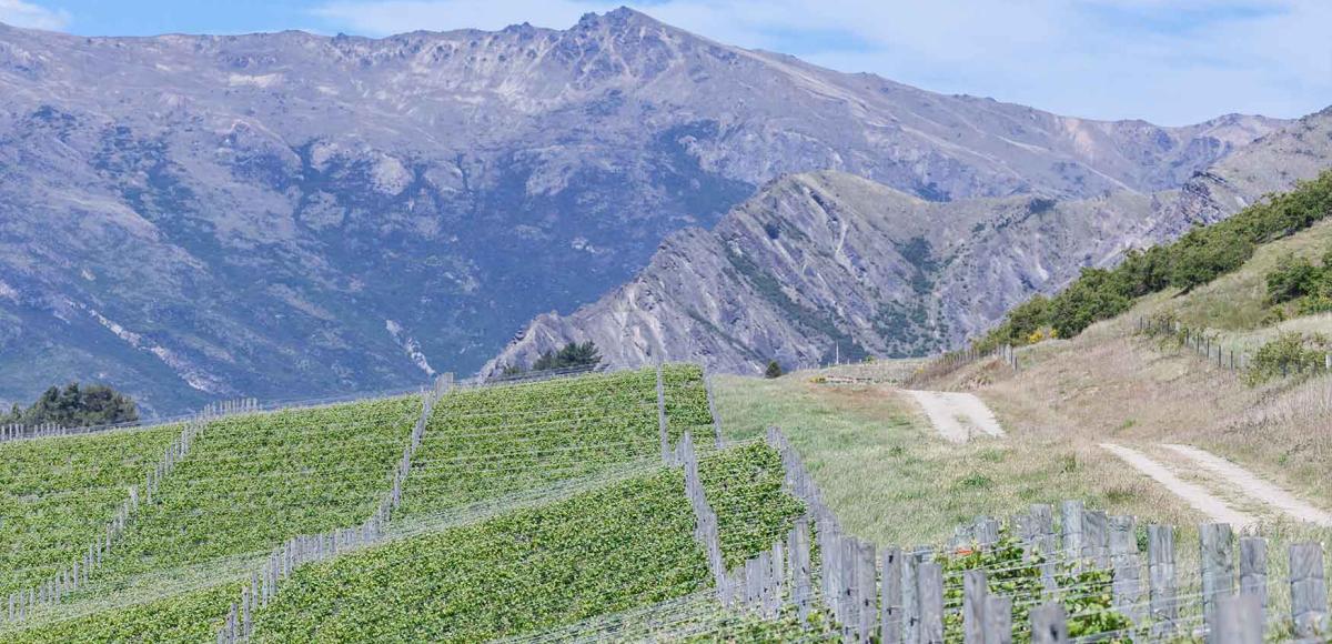 Descubre los Vinos de Nueva Zelanda