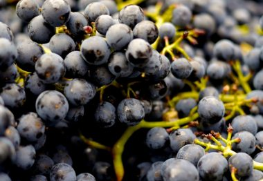 What is Tannin in Wine?
