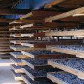 Discover the Wines of Valpolicella