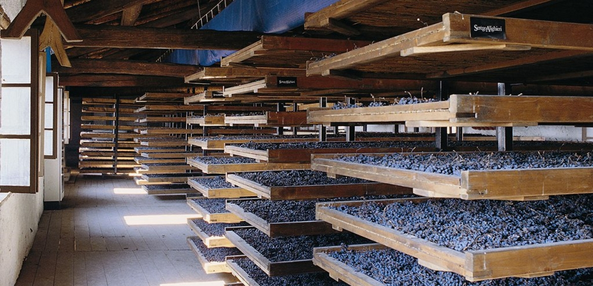 Descubre los Vinos de Valpolicella