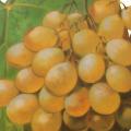 Descubrir Moscatel - Blog de vino
