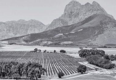 Enovacaciones | Blog de vino de Mark O'Neill