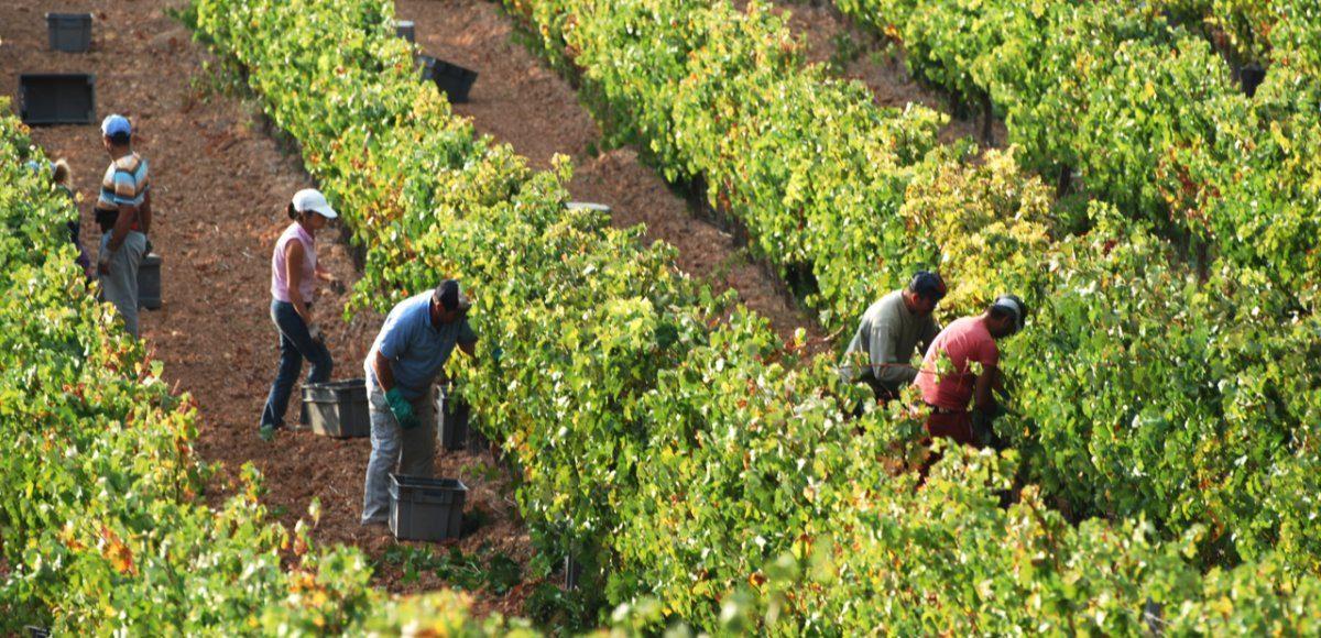 The Harvest | Wine Blog