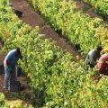 The Harvest   Wine Blog