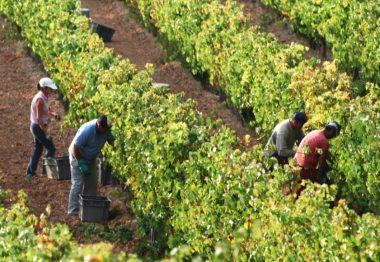 La vendimia | Blog de vino de Mark O'Neill