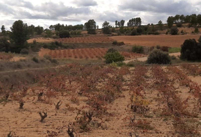 Wines from Valencia: Planning for the Future