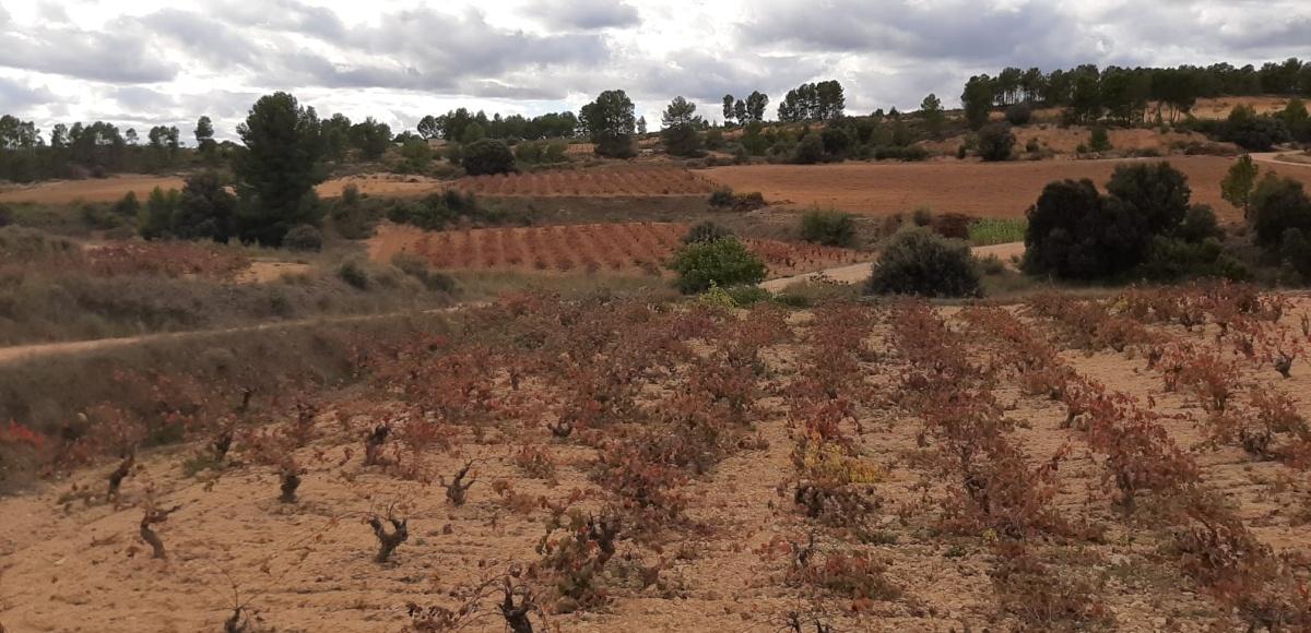 Vinos valencianos: Un proyecto para el futuro