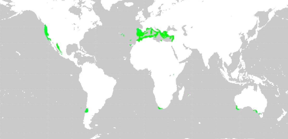 Mediterranean Climate Wines