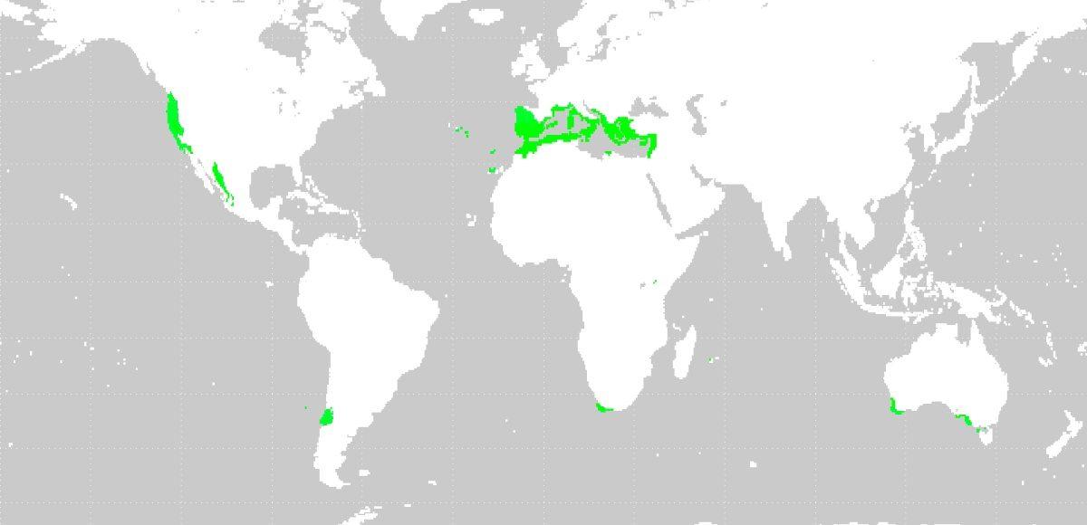 Vinos de clima mediterráneo