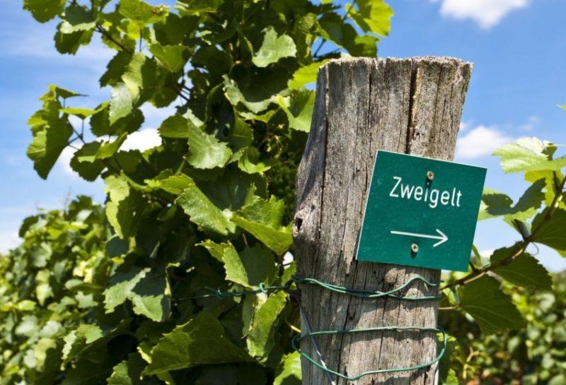 Zweigelt, la uva con un nombre nazi