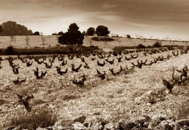 Discover the Wines of Jumilla